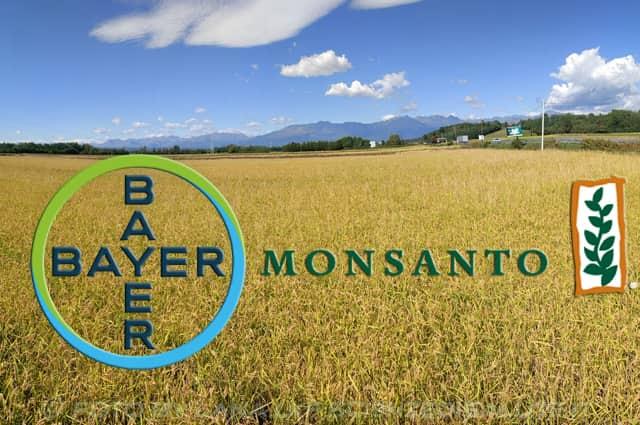La Bayer nel mirino delle denuncie, alla lista si aggiungono anche i PCB