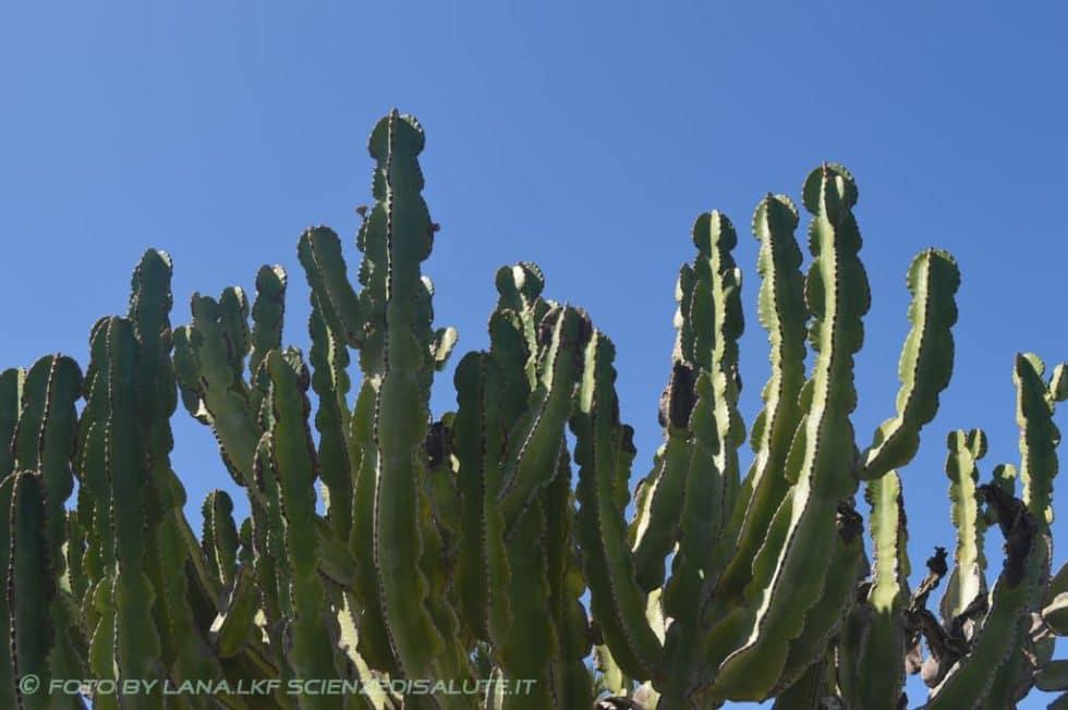 Gran-Canaria-un-angolo-di-paradiso-by-LKF-foto-16